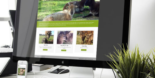 Website Design Haywards Heath